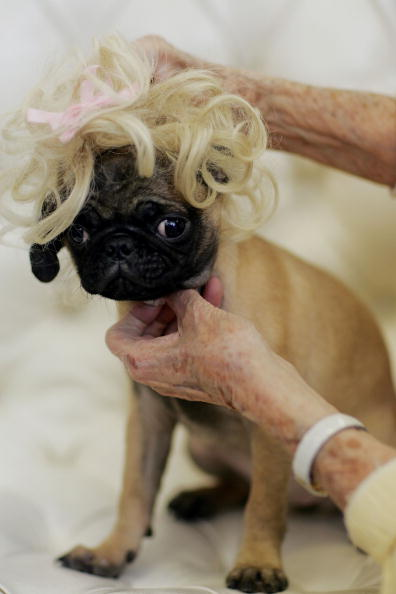 Care「Wigmaker Designs Hairpieces For Pampered Pets」:写真・画像(15)[壁紙.com]