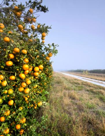 Grove「Orange Grove」:スマホ壁紙(14)