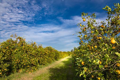Grove「Orange grove」:スマホ壁紙(13)