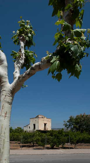 Camino De Santiago「Orange grove around an ancient building in Spain」:スマホ壁紙(2)