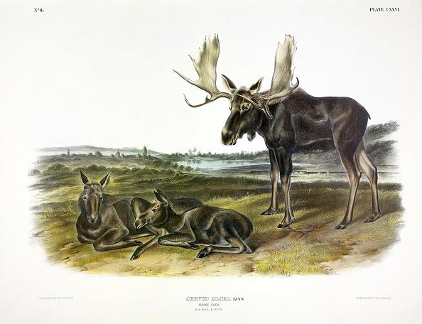 Archaeology「Moose Deer」:写真・画像(12)[壁紙.com]