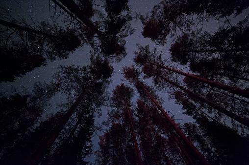 star sky「松の森天」:スマホ壁紙(9)