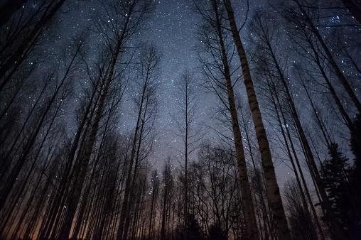 star sky「星空の木立」:スマホ壁紙(16)
