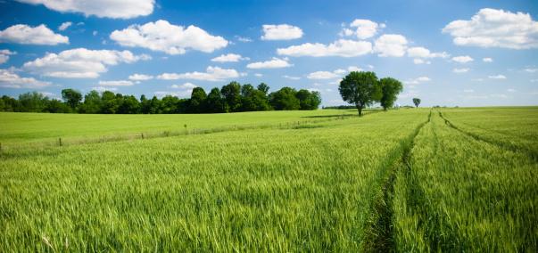 Kansas「Summer fields」:スマホ壁紙(15)