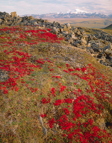 Arctic National Wildlife Refuge「Tundra Below Brooks Range」:スマホ壁紙(6)