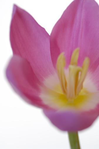 花「Nature」:スマホ壁紙(0)