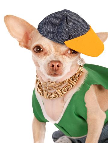 Chihuahua - Dog「rapper」:スマホ壁紙(2)
