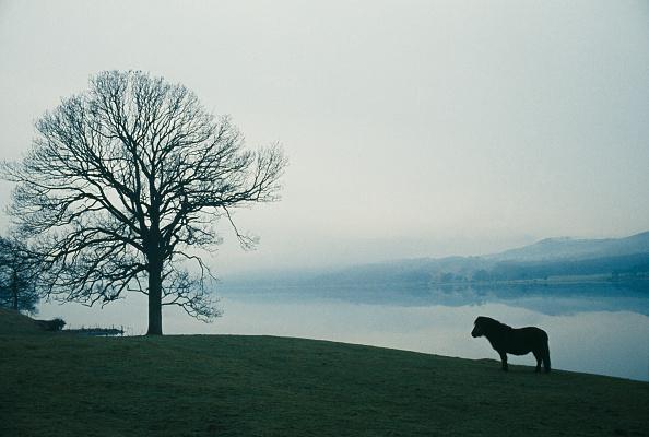 静かな情景「Coniston Water」:写真・画像(13)[壁紙.com]