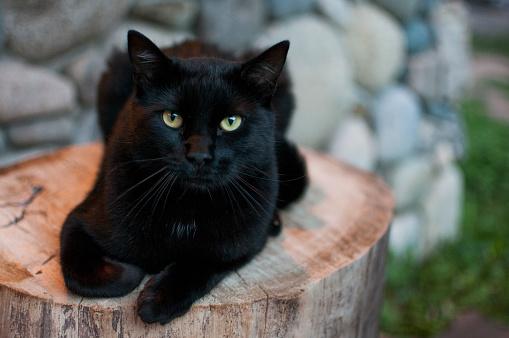 black cat「Black Cat on Tree Stump」:スマホ壁紙(5)