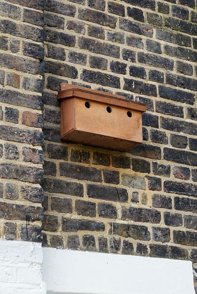 Environmental Conservation「Bird box on exterior wall of Victorian house」:写真・画像(3)[壁紙.com]