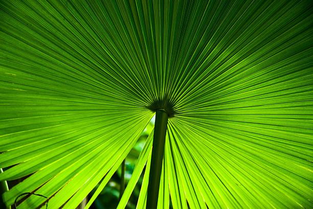 palm:スマホ壁紙(壁紙.com)