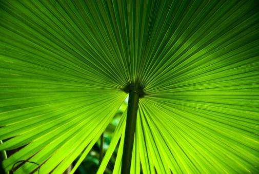 Focus On Background「palm」:スマホ壁紙(3)