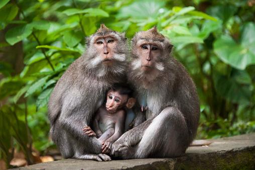 Ubud District「Monkeys sitting on stone banister」:スマホ壁紙(9)