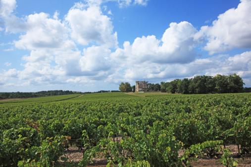 Nouvelle-Aquitaine「Bordeaux vineyards, Chateau Laessan, Medoc, Girode, France」:スマホ壁紙(5)