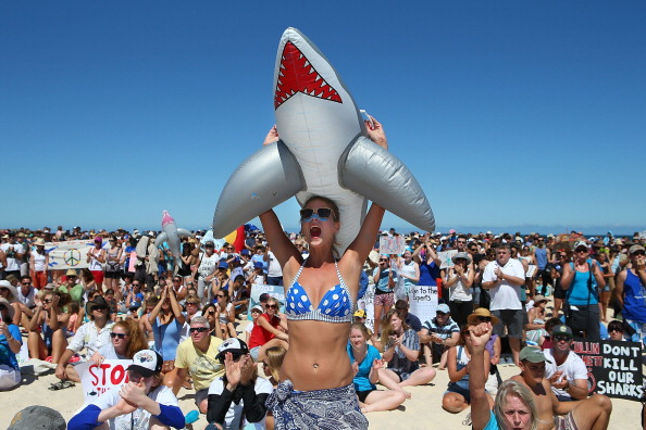 Strategy「Demonstrators Protest Against WA Shark Culling Policy」:写真・画像(3)[壁紙.com]