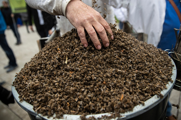 Insecticide「Bayer AG Holds Annual Shareholders Meeting」:写真・画像(11)[壁紙.com]