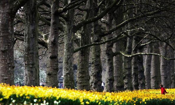Public Park「Britain Enjoys Spring Weather」:写真・画像(13)[壁紙.com]