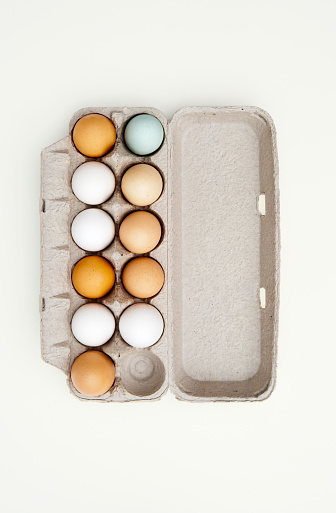 Animal Egg「Colored eggs in egg carton」:スマホ壁紙(14)