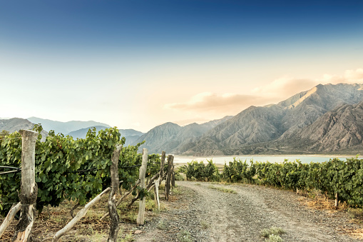 Wooden Post「Malbec vineyard at 1380 meters above sea level in the Andes mountain range, Mendoza province, Argentina.」:スマホ壁紙(17)