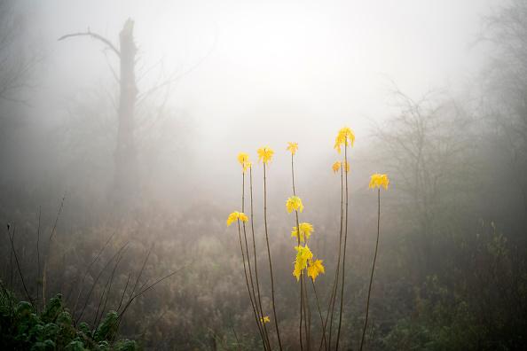 Perching「Morning Fog in Northwich, England」:写真・画像(3)[壁紙.com]