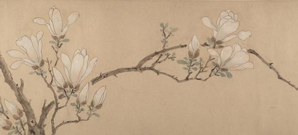 Petal「Magnolia」:写真・画像(1)[壁紙.com]