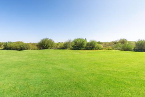 Grass「bright lush grass field and blue sunny sky.」:スマホ壁紙(19)