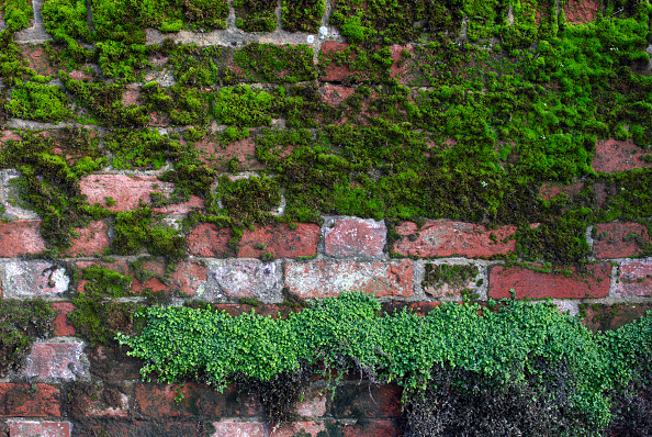 Brick Wall「Fungus and moss growing on bricks」:写真・画像(18)[壁紙.com]