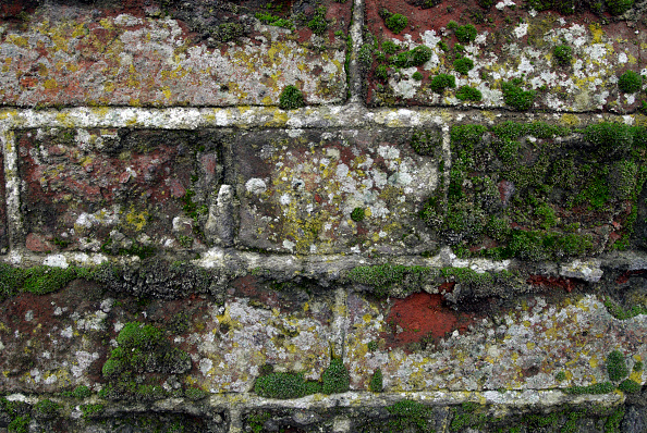 Brick Wall「Fungus and moss growing on bricks」:写真・画像(14)[壁紙.com]