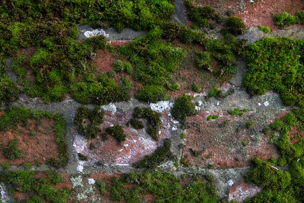 Brick Wall「Fungus and moss on a brickwall」:写真・画像(12)[壁紙.com]