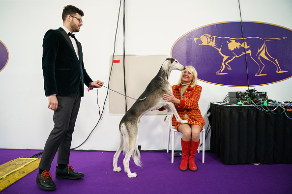 Waiting「Annual Westminster Dog Show Takes Place In New York City」:写真・画像(14)[壁紙.com]