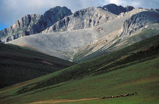 Yak「China, Sichuan Province, Khampas leading their yak caravan」:スマホ壁紙(13)