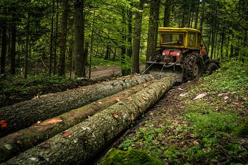 Lumber Industry「Skidder pulling logs」:スマホ壁紙(17)