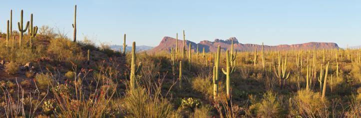 Cactus「Desert Cactus Panorama」:スマホ壁紙(16)