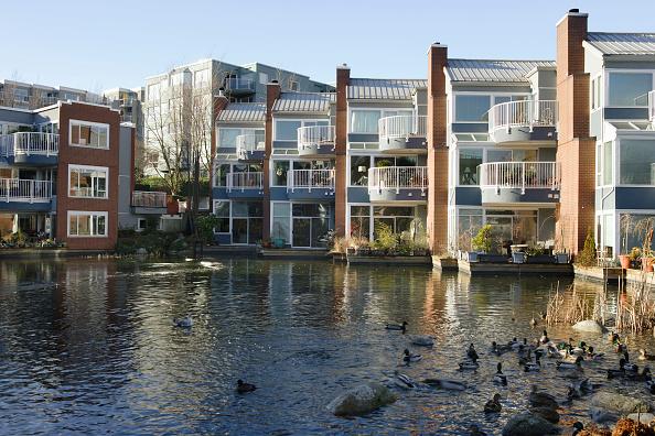 Aquatic Organism「Vancouver, British Columbia, Canada」:写真・画像(5)[壁紙.com]