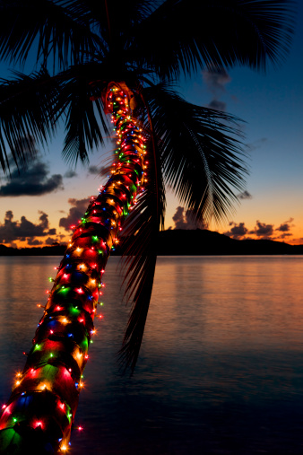 Frond「Christmas lights on palm tree at a Caribbean beach」:スマホ壁紙(1)