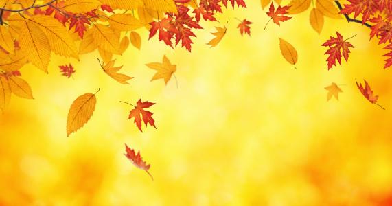 かえでの葉「、木から落ちています。」:スマホ壁紙(11)