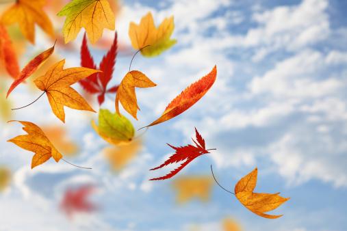紅葉「空から落ちています。」:スマホ壁紙(16)