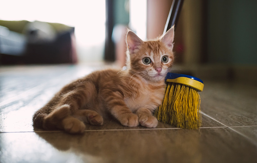 Kitten「Ginger kitten leaning against broom」:スマホ壁紙(19)