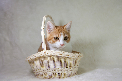 Kitten「Ginger kitten in a basket」:スマホ壁紙(5)