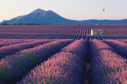 Rustic「A rustic barn amongst rows of lavender in Provence, France」:スマホ壁紙(16)