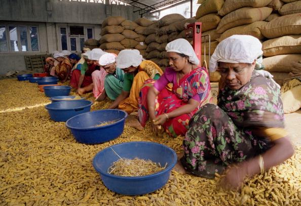 Herb「Kerala, India」:写真・画像(4)[壁紙.com]