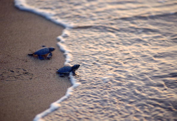 Decisions「Pair of Turtles, Cyprus Beach」:写真・画像(0)[壁紙.com]