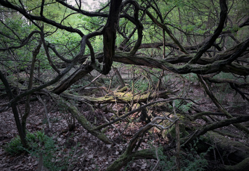 North Brabant「Ray of light entering dense forest」:スマホ壁紙(11)