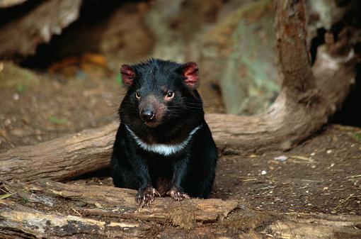 1990-1999「Tasmanian Devil」:スマホ壁紙(16)