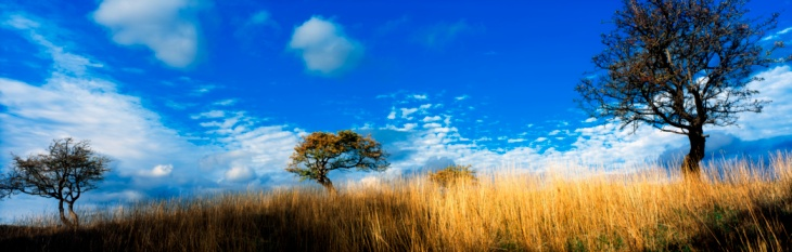 Hawthorn「Ireland, Hawthorn Trees」:スマホ壁紙(4)