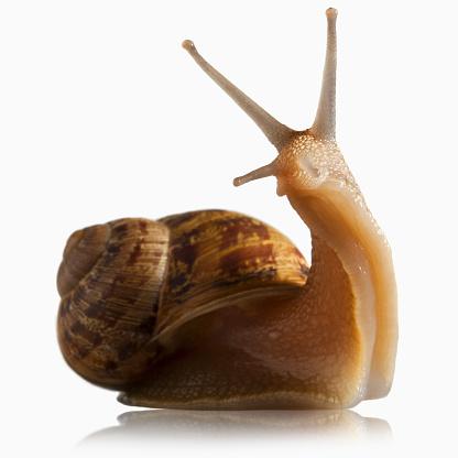 カタツムリ「Snail out of shell」:スマホ壁紙(6)