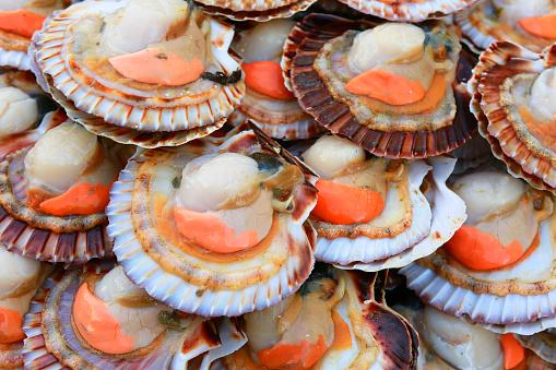 Scallop「scallops for sale in a Paris fish market」:スマホ壁紙(11)