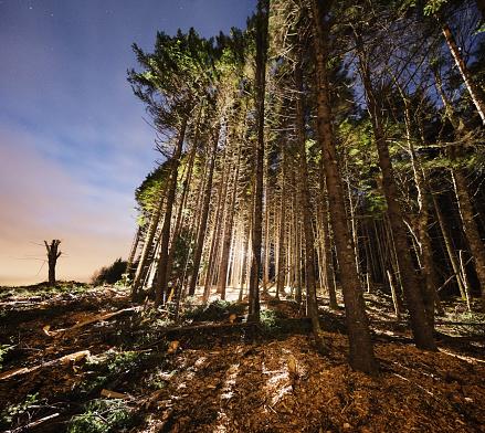 Deforestation「Light in the Forest」:スマホ壁紙(12)
