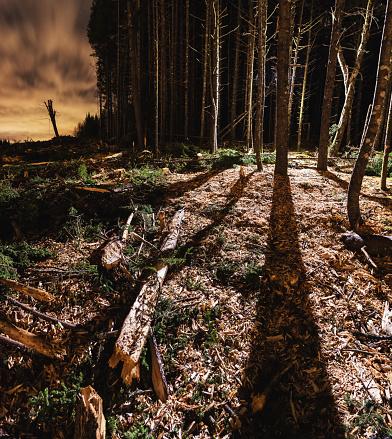 Deforestation「Light in the Forest」:スマホ壁紙(4)