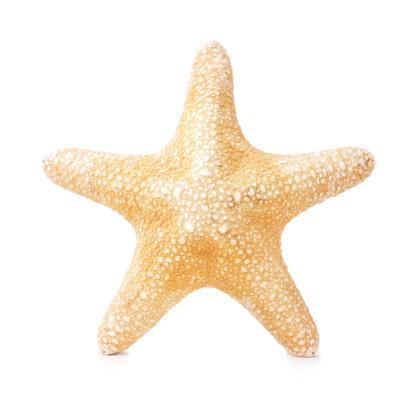 Starfish「Starfish isolated on white」:スマホ壁紙(3)